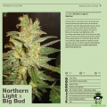 Nothern light X Big bud W&S FRØ 7 stk